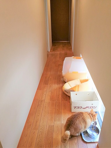 ネコグッズが置かれた扉