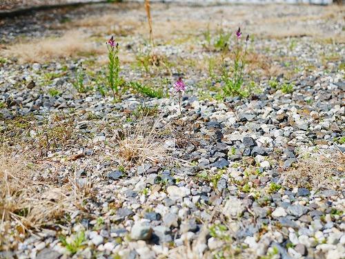 砂利を敷いた庭