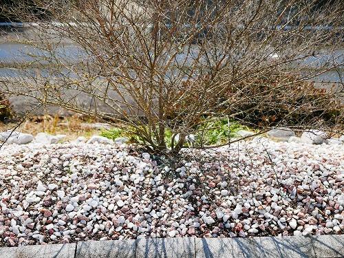 除草剤の撒きすぎで枯れた木